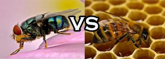 Lalat dan Lebah